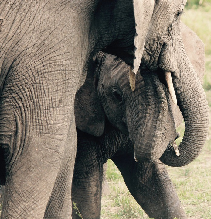Mother elephant with her baby
