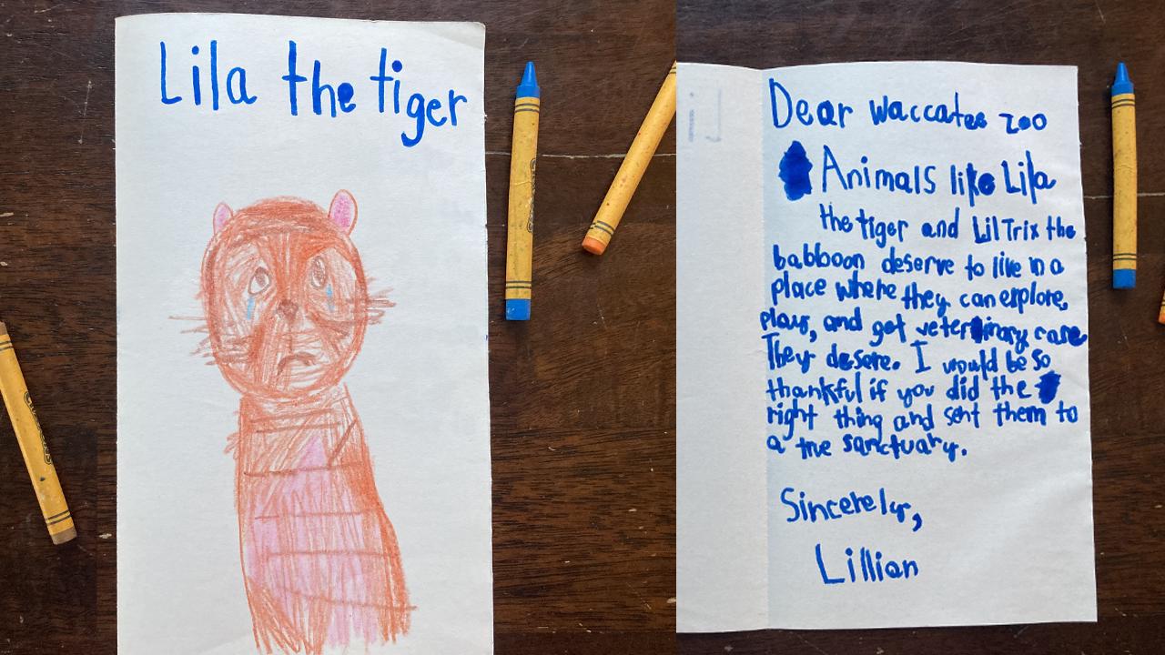 image of the Lila card to Waccatee Zoo