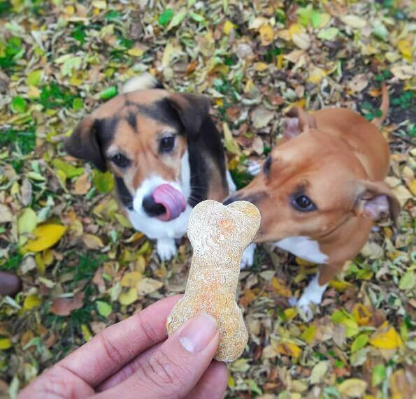 dogs with treat