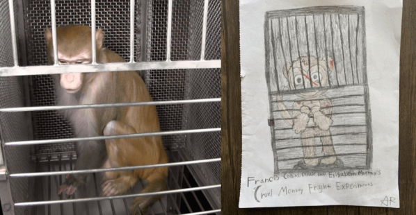 Your Drawing Can Help Monkeys Used in Experiments!