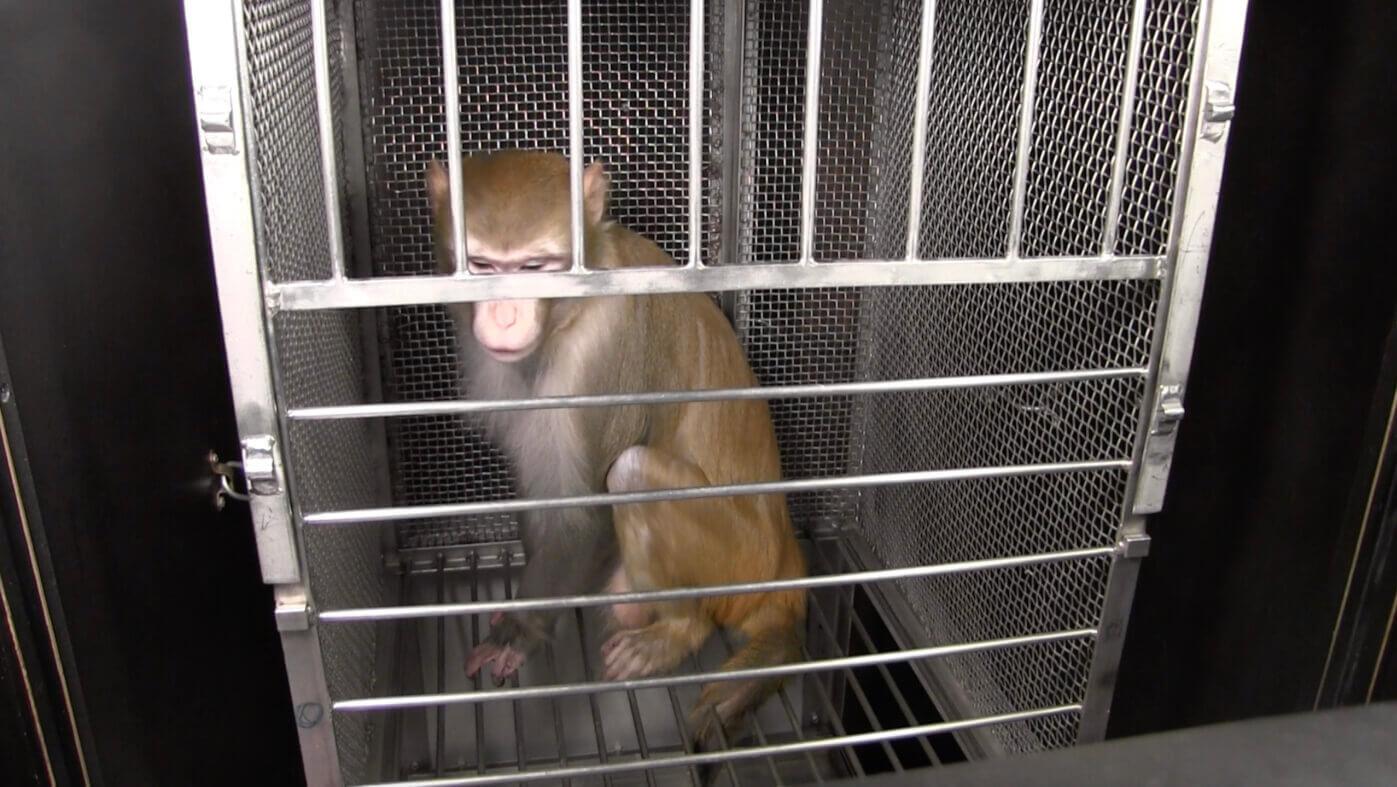 NIH Monkey Experiments