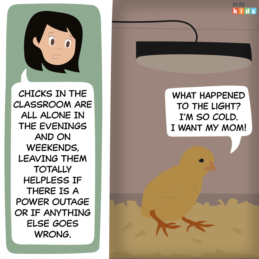 chick hatching comic