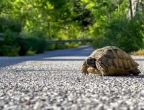 A Group of Friends Helps Turtles Cross the Road!