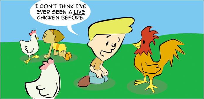 chickens-life-slide-16