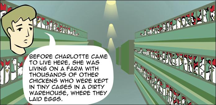 chickens-life-slide-19