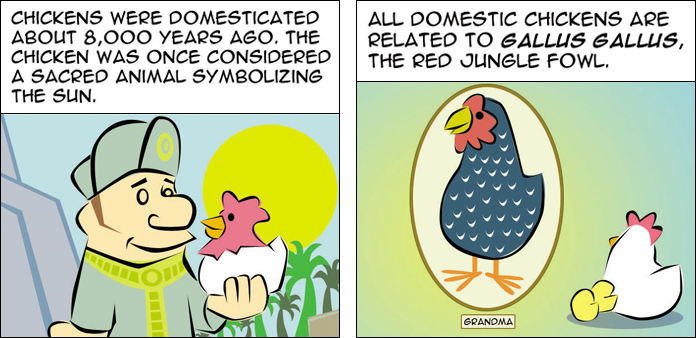 chickens-life-slide-3