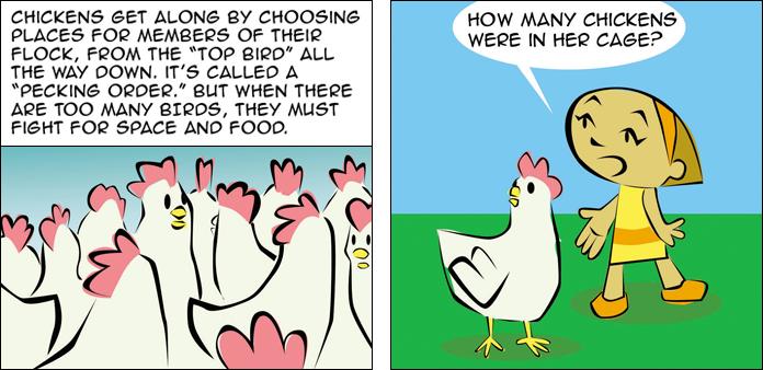 chickens-life-slide-31