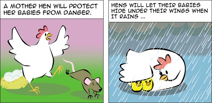 chickens-life-slide-6