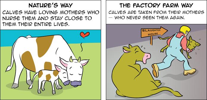 A Cow's Life' Comic Book | Activities | PETA Kids