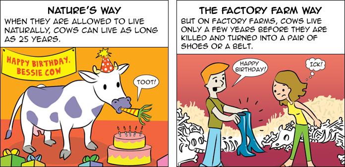 cows-life-slide-29