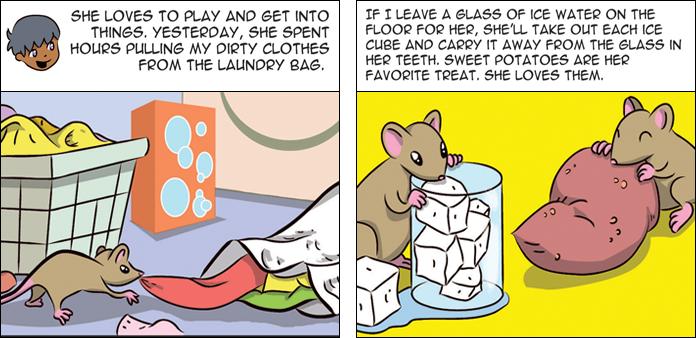rats-life-slide-5