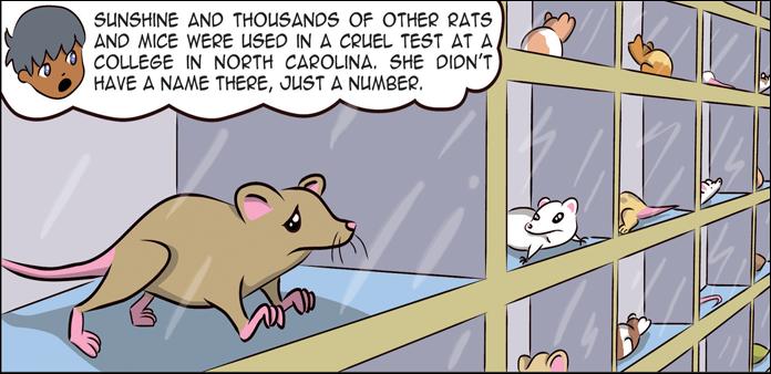 rats-life-slide-7