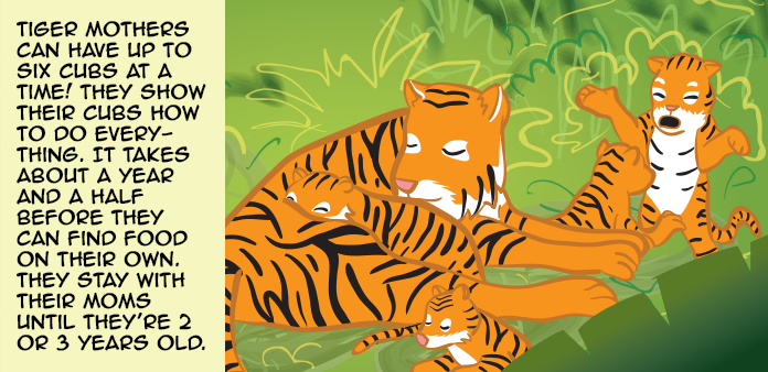 tigers-life-slide-18