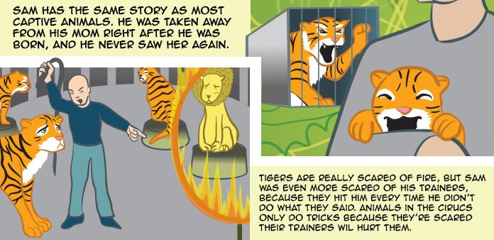 tigers-life-slide-22